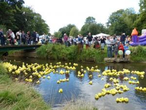 Duck-Race-2013